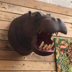 Tête d'hippopotame vintage