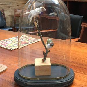 Globe de mariés contenant 2 taxidermies d'oiseaux