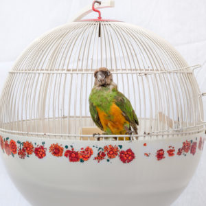 Cage à oiseaux années 70