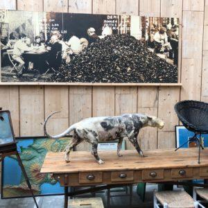 Photo originale du restaurant «Aux Moules» de Lille
